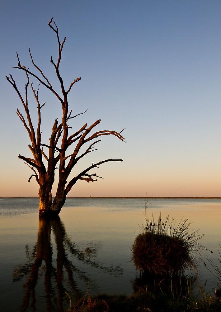 Lake Bonney by David  Piko