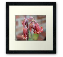 Simple Succulent Framed Print