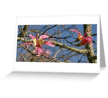 Picture of Autumn Greeting Card