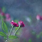 Garden romance by Maria Ismanah Schulze-Vorberg