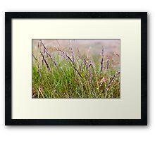 Grass On Nevis Framed Print