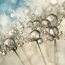 Sapphire & Silver Sparkle by Sharon Johnstone