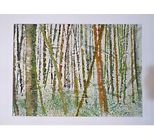 Japanese Bamboo Forest Photographic Print