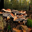 Autumn colours by Paulo van Breugel