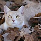 Kitty in the Leaves by Kimberly Palmer