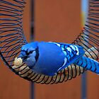BlueJay @ the Feeder by Larry Trupp