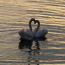 Love Swans by Aoife McNulty