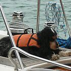Sea Dog by pix-elation