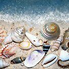 Sea Shells by the Sea Shore by Sheri Nye