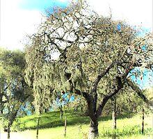 Tree Moss by Denise Baker