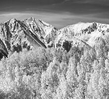 Colorado Rocky Mountain Autumn Magic Black and White by Bo Insogna