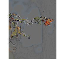 Daydreams in the Autumn Woods Photographic Print