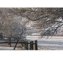 A frosty orchard Photographic Print
