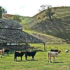 Old Barn Cows by Denise Baker