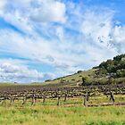 Santa Pietra vineyard by Denise Baker