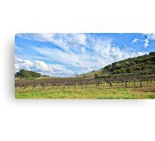 Santa Pietra vineyard Canvas Print