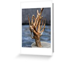 Rooted Tree Greeting Card