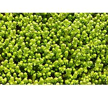 Sea of Green Photographic Print