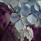 Blue panicles by Dulcina