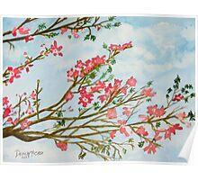 silk floss tree flowers art print Poster