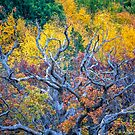 The Colours of Fall by Mikell Herrick