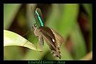Emerald Peacock Butterfly by Kimberly Chadwick