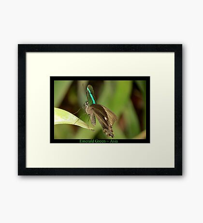 Emerald Peacock Butterfly Framed Print