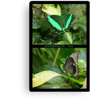 Emerald Peacock~ Collage Canvas Print