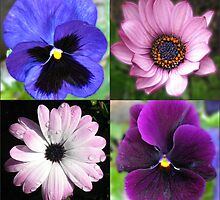 Cute Pansies and Daisies Collage by BlueMoonRose