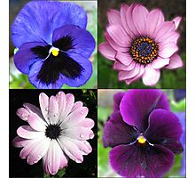 Cute Pansies and Daisies Collage Photographic Print