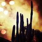 cactus by geophotographic