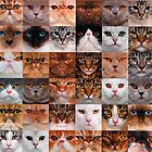 Cat Faces by RusticShiraz