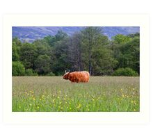 Spring In The Highlands Art Print
