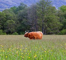 Spring In The Highlands by Adrian Alford Photography