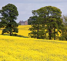 Canola by Adrian Alford Photography