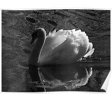 Unfolding Wings-Swan of Light Poster