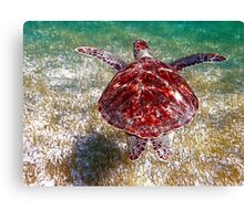 Flying through the Caribbean Seas Canvas Print