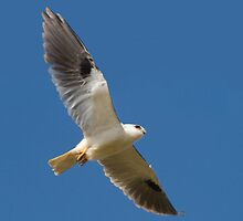 On The Glide by byronbackyard