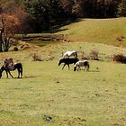 Grazing by Sandy Woolard