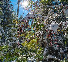 Winter Woodland in the French Alps by Nick Jenkins