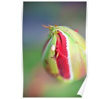 Aphid on Rose Bud Poster