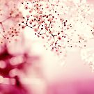 pink linen by Ingz
