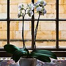 Flowers in front of a window by jasminewang