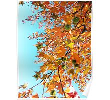 Sweet Gum Tree Poster