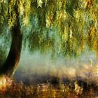 Artscape WillowTree on the Rhine..........Autumn 2013 by Imi Koetz
