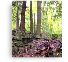 Stone Roots Canvas Print
