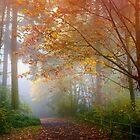 Fall In Seattle by Mark Bauschke