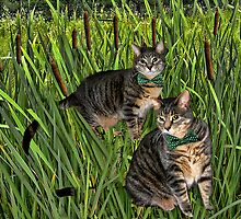 <º))))>< CATS AND CATTAILS <º))))><  by ╰⊰✿ℒᵒᶹᵉ Bonita✿⊱╮ Lalonde✿⊱╮