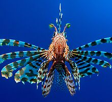 Lionfish by Henry Jager
