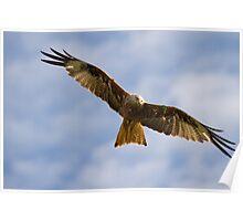 Red Kite Poster